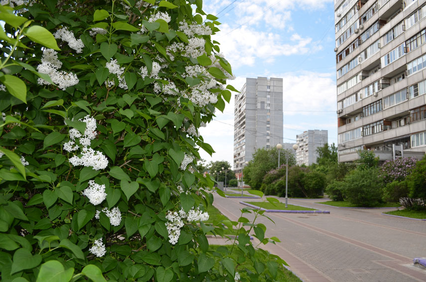 Зеленоград и Троицк: видимые параллели