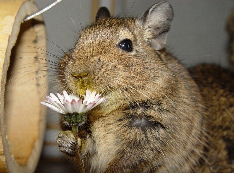 Выставка экзотических животных открылась в КЦ «Зеленоград»