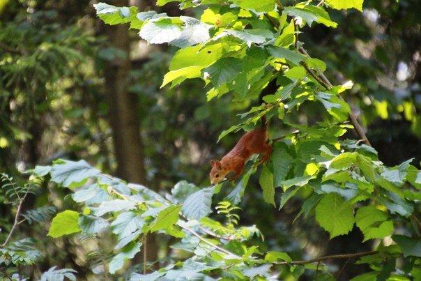 Зеленоградский филиал «Мосприроды» просит не кормить обитателей лесопарковых зон