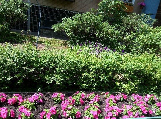 Народный конкурс на самый нарядный палисадник продолжается в районе Силино