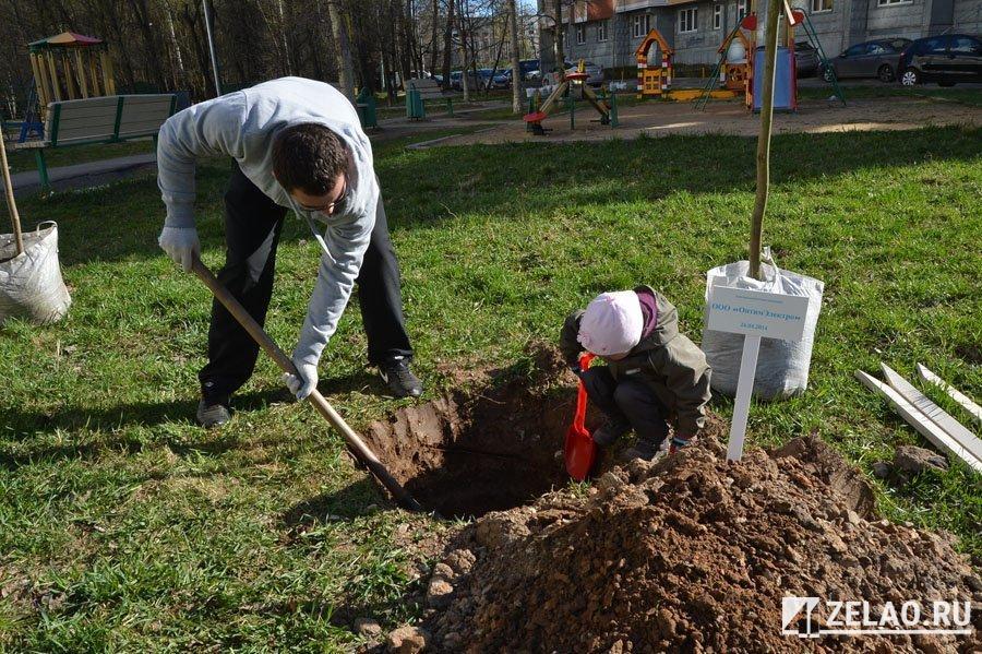 Новые зеленые насаждения украсят территории социальных и спортивных учреждений в Зеленограде