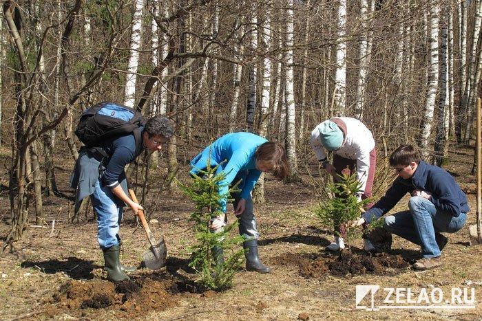 Владимир Рунов: «В последнее время в наших лесопарках появились необычные деревья»