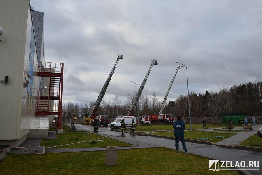 Чтобы снять улей в 12 микрорайоне, потребовалась пожарная автолестница